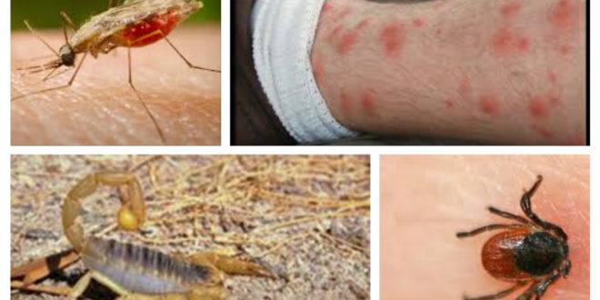 الحشرات التي تلدغ