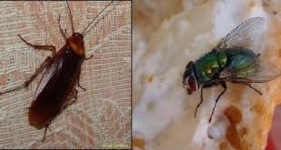 انتشار الحشرات بالمنزل