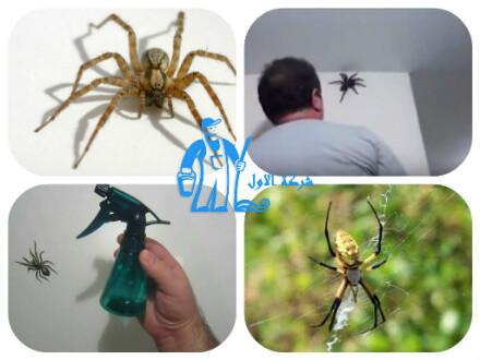 التخلص من العناكب